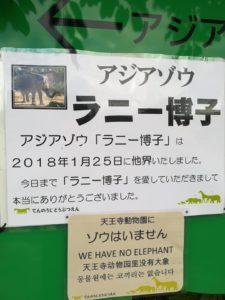 天王寺動物園のゾウ「ラニー博子」が他界