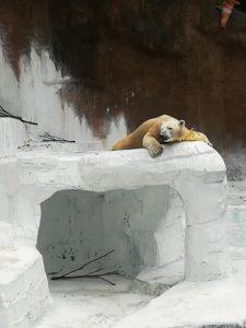 天王寺動物園のホッキョクグマ