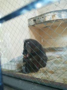 天王寺動物園のマンドリル