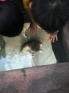 天王寺動物園のライオンを見下ろす