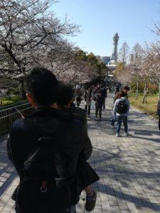 てんしばゲートから見る桜と通天閣