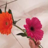 オレンジとピンクのガーベラ