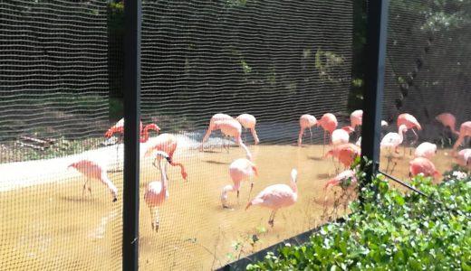 ゴールデンウイークの天王寺動物園で迷子になった話