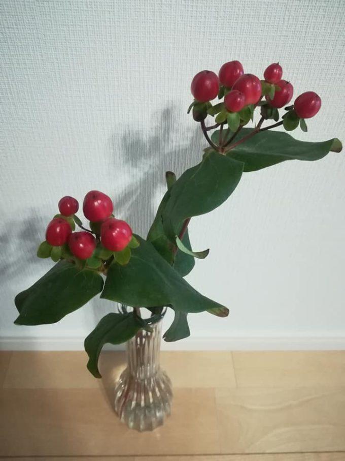赤いヒペリカムの切り花