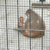 猿の赤ちゃん
