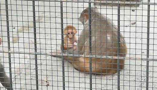 「お猿のママ会@大阪府堺市の大浜公園」を見学