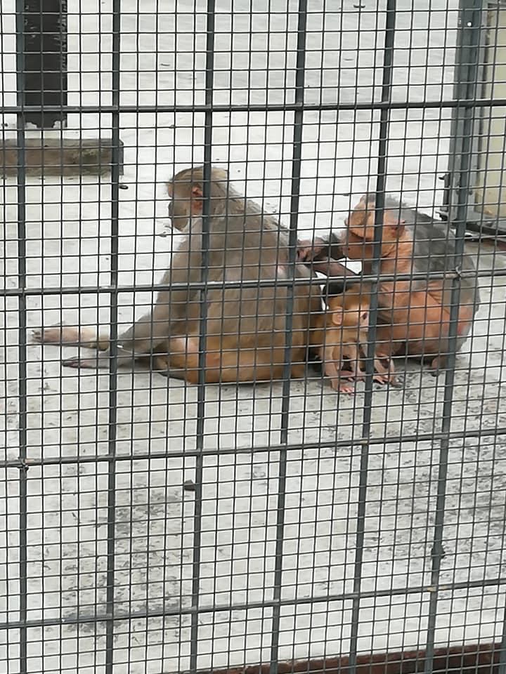 猿の毛づくろい