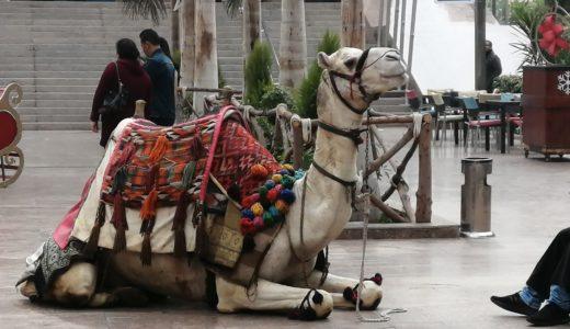 エジプト!メトロでカイロタワーを見に行ったよ